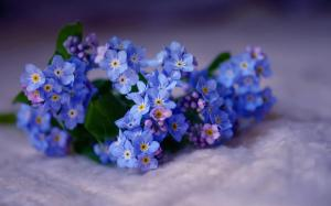 Forget-me-not-Flower-Wallpaper5
